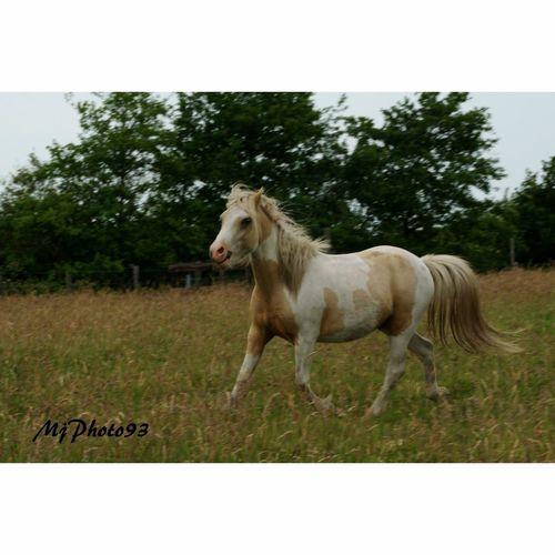 Horses Nature Beautiful Horse Love Animal