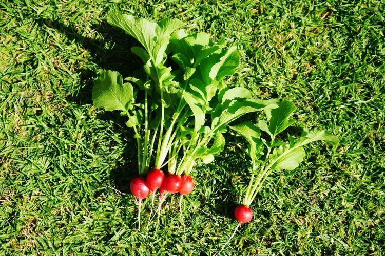 Red berries growing on field