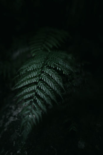 Close-up of fern at night