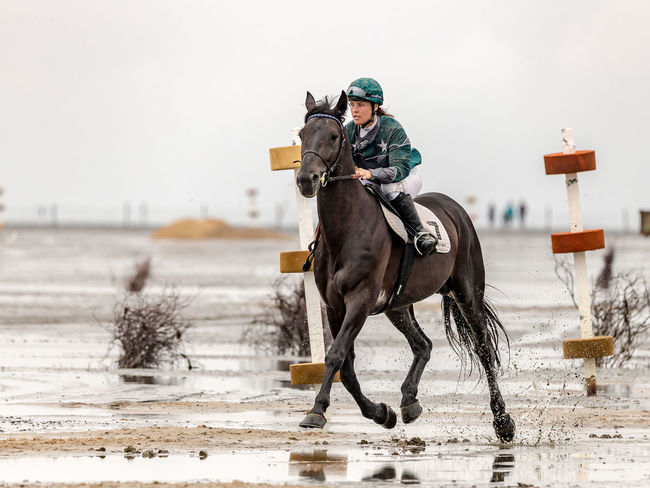 Beach Galloping Galloprace Galopper Horse Racing Horse Riding Horses Sports Photography