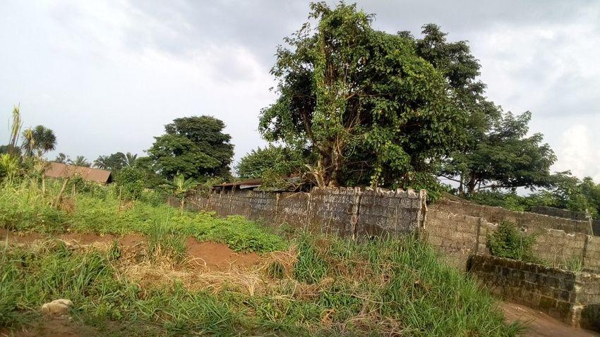 Ruined Walls in African bush Farmland Trees And Sky Ruined Wall African Bush Grass