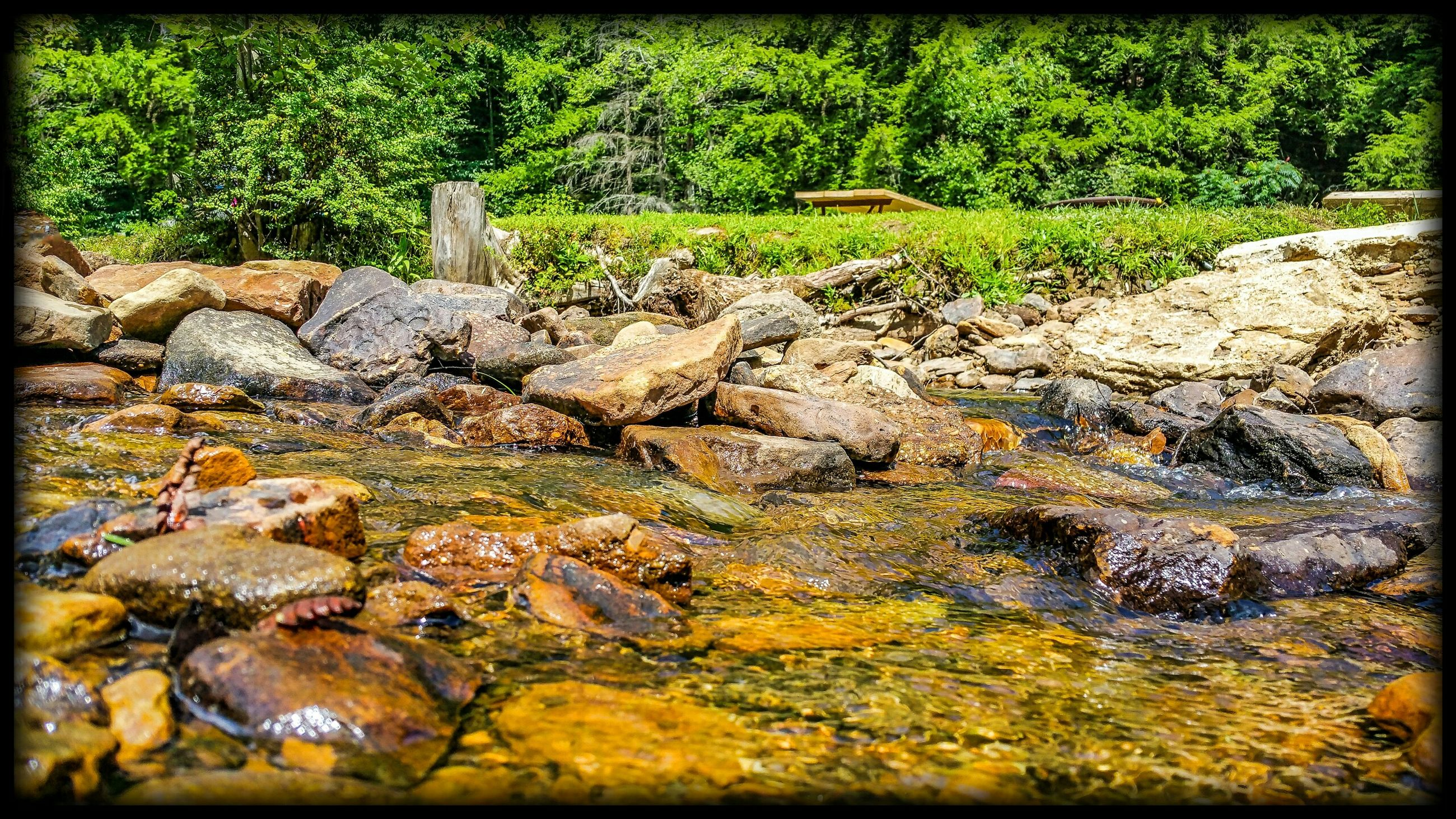 transfer print, auto post production filter, rock - object, nature, stone - object, plant, moss, growth, tranquility, high angle view, green color, water, tree, day, outdoors, rock, stream, stone, beauty in nature, no people