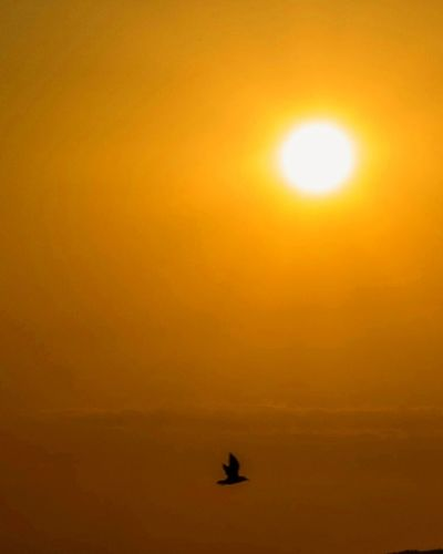 Sun Sunset Scenics Orange Color Idyllic Tranquil Scene Majestic Beauty In Nature Silhouette Tranquility Vacations Atmosphere Water Sea Nature Reflection Calm Flying Remote Sky
