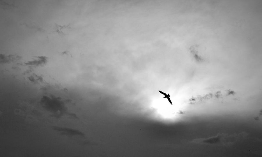 Bir Sezen aşığından fotoğraflar Siyahbeyaz Siyah&beyaz  Bnw Bnw_collection Bnw_life Bnwphotography Bird Photography Turkey EyeEm Gallery Eyeemphotography EyeEm EyeEm Selects Life Lifestyles Bird Flying Mid-air Silhouette Sky Airshow