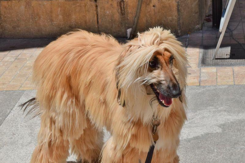 Animal Hair Animal Themes Beautiful Day Dog Doggy Dogs Domestic Animals Hairy  Luxurylifestyle  Luxuryselfies Mammal No People One Animal Outdoors Pets
