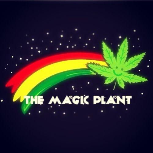 The Magic Plant. Themagicplant Magicalmarijuana Thegoodweed Bluntsanddoobies thegoodkush inhailthegoodsmoke puffpuffpass thehappydrug rasta instasmokes instamaryjane hailmaryjane gethigh instadope instahigh lovenofight