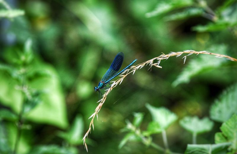 One Animal Animals In The Wild Animal Themes Insect Damselfly Blue Focus On Foreground Nature Outdoors Animal Wildlife Day No People Leaf Plant Close-up Dragonfly Mayfly