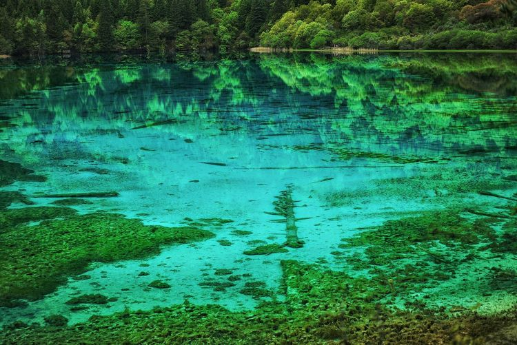 China Photos Beautiful Lake Mountains Water Reflections Underwater Dead Trees Peace And Quiet Nature Treepark Nature Reserve Urban Landscape Urban Nature Freshness Multi Colored