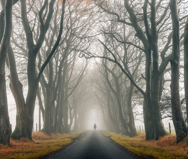 Fog fun. Tree Fog Autumn Forest Walking Cold Temperature Winter Scotland EyeEm Best Shots EyeEm Masterclass Landscape_Collection Landscape Photography EyeEm The Best Shots EyeEmNewHere EyeEm Selects EyeEm Team