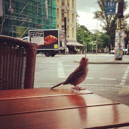 Having lunch with him Berlin Lunch Lunchbreak Bird