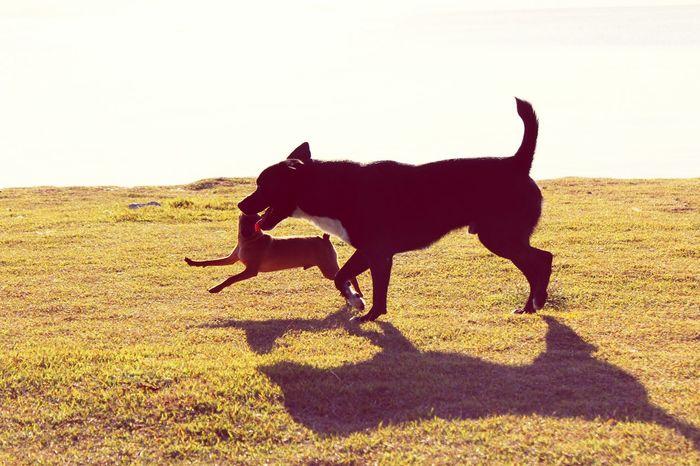 Dog Dogs Nature Life Florianópolis Brasil Lovedogs Love Beiramar Friends