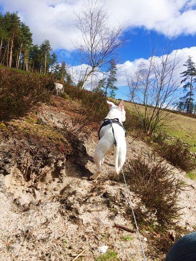Staffordshire Bull Terrier Staffy Doggy Adventure Pets Corner Dog Days