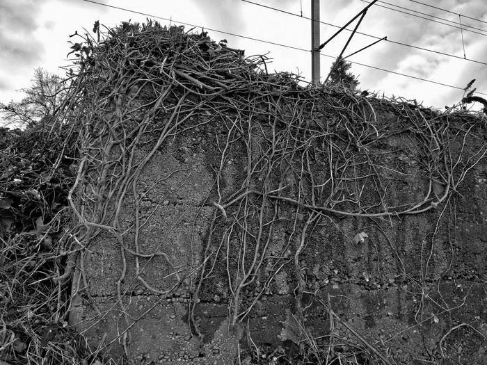 Bad Condition Bare Tree Black & White Blackandwhite Branch Danger Dry Fence Grass HDR Hdr_Collection Metal Monochrome Nature Plants Season  Twig Winter The Great Outdoors With Adobe