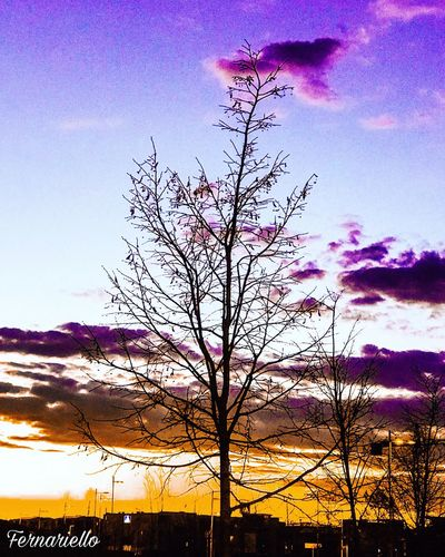 Nature Sky Beauty In Nature Silhouette Low Angle View Outdoors Sunset Tranquility No People Growth Scenics Cloud - Sky Tranquil Scene Day Tree Bird Flying