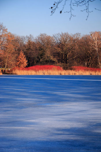 Beauty In Nature Blueice Clear Sky Day Frozen Frozen Lake Heiliger See Lake Lakeshore Landscape Nature Nature Photography Naturelovers Outdoors Potsdam Reed Scenics Tranquil Scene Tranquility Tree Winter Winterwalk