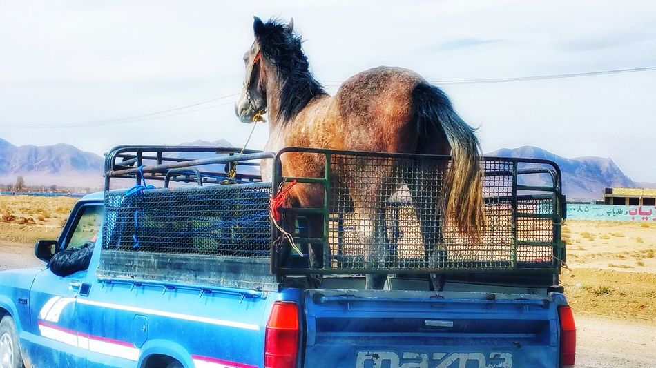 Horse Cavalli Desert Iran♥ Irantravel Iran Nature