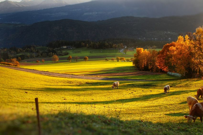 Landscape Tree Grass Day Rural Scene Outdoors No People Nature Agriculture Field Sunset Beauty In Nature Scenics Backgrounds Growth Green Color Sommergefühle Sky Mountain Freshness