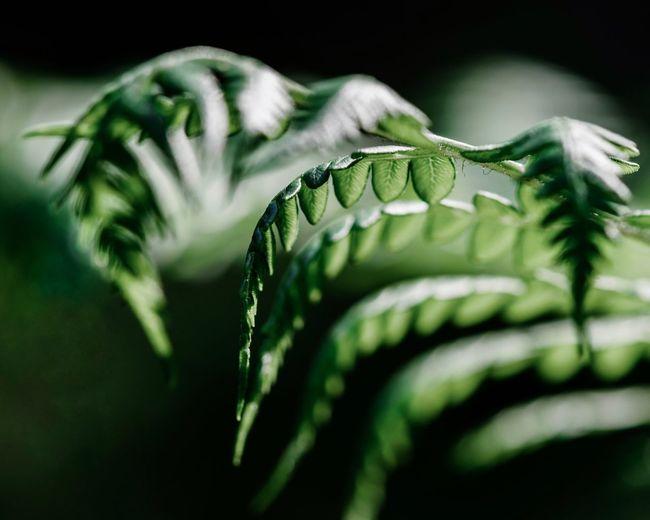 Fern Ferns