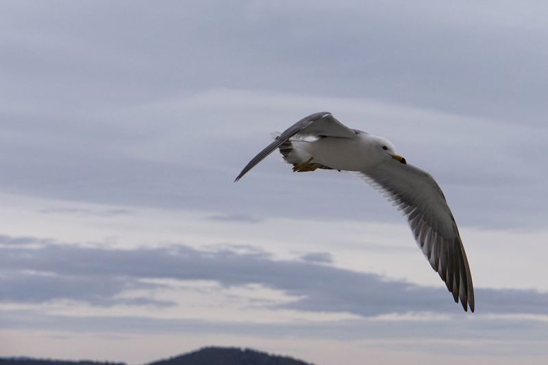 Sky And Clouds Flying Eye Em Nature Lover One Animal Bird Spread Wings Animal Themes Animals In The Wild Sky