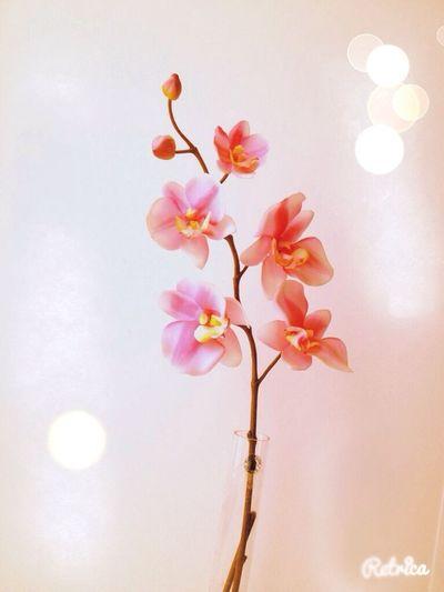 Flower:З