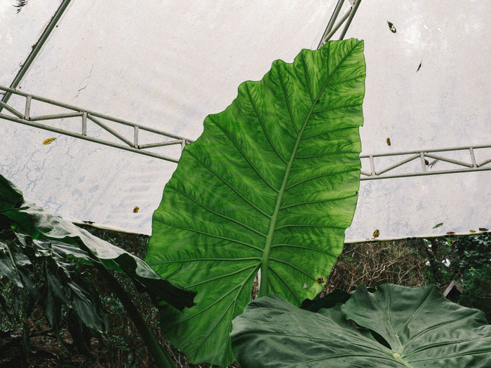 High angle view of leaves in greenhouse