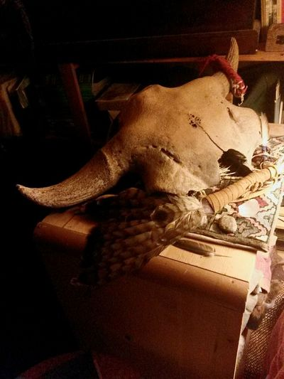 Bison Antiquus sacred buffalo skull with hawk fan and sun dance sage Native American Indian Ceremony Sacred Indian Wäkan