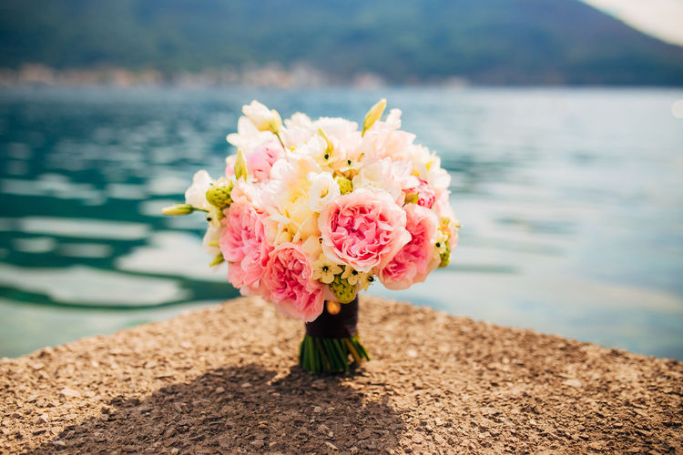 Close-up of pink rose flower in lake