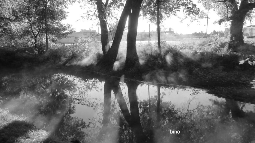 Taking A Walk Around My Neighborhood Early Morning Foggy Landscape Very Cool ✌ Clam River Walkway Black And White Photography Cadillac Michigan