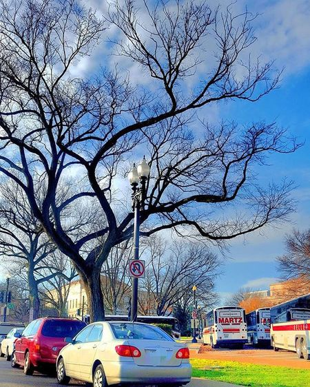 Naturephotography Naturelover Nature Naturaleza árbol Treelovers Tree Trees Silouette Branches Sky Blueskies Beautiful Beautifulday Aneyeforaphoto Photographylovers Photography Mypointofview Picofthedays Pictureoftheday Photographie  Igbest Igmasters Hiddentalent Brightcolors ontheroad streetphotography street bus sidewalk brightcolors