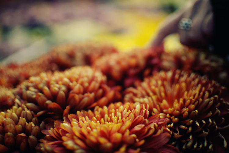 Abundance Beauty In Nature Check This Out Close-up Day EyeEm Best Shots EyeEm Gallery Flower Flower Head Focus On Foreground Fragility Freshness Full Frame Hanging Out Large Group Of Objects Light And Shadow Market Market Stall Nature Nikon Outdoors Petal Retail  Selective Focus The Week Of Eyeem