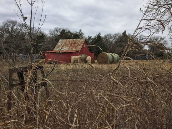 Winter in Texas Landscape_Collection Landscape Barn Cattle Field Hay No People Sky Agriculture Day Built Structure Outdoors Architecture Tree Rural Scene Tranquility