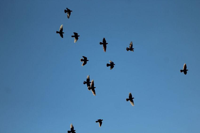 EyeEm Selects Racing Pigeons