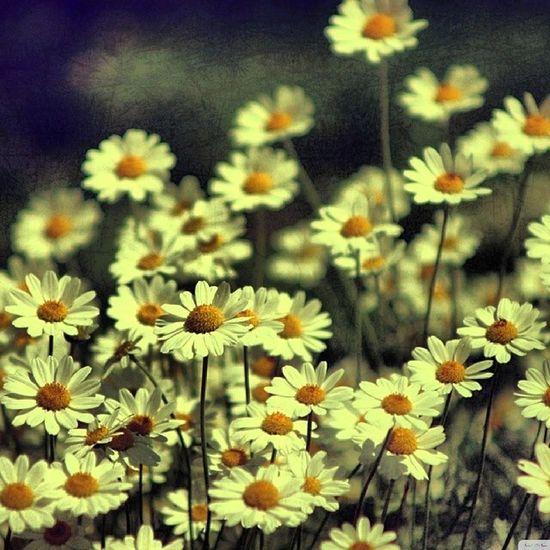 Good morning Flowers Morning Greaternoida Golchakkar Sharda NCR