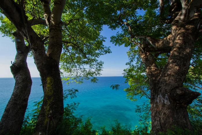 Beach Tree Water Lake Tree Trunk Blue Reflection Sky Landscape