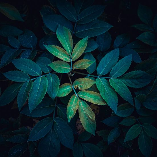 beautiful abstract plant leaves in the garden Plant Leaf Leaves Floral Garden Nature Abstract Textured  Wallpaper Beauty In Nature Beautiful Beauty Freshness Fresh Green