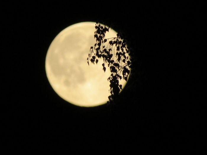 Sky Moon Circle