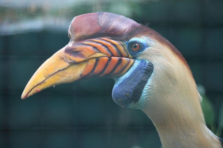 Close-up of a bird
