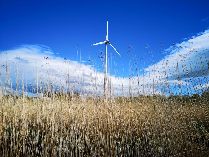 Huawei P20 pro Wind Turbine Wind Power Power In Nature Technology Clear Sky Alternative Energy Rural Scene Fuel And Power Generation Electricity  Blue Industrial Windmill Traditional Windmill Ear Of Wheat Farmland Renewable Energy Blooming Cereal Plant Growing Windmill Rye - Grain Oat - Crop Wheat Whole Wheat Oat Flake Corn - Crop Loaf Of Bread Cultivated Land Environmental Conservation RainDrop Shore