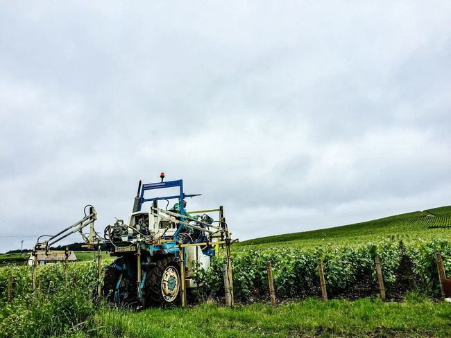 Naturelovers France Champagne Region Champagne Champagne Grapes Green Grapes Wine Grapes Vivelafrance Wine Agriculture Agriculture Photography Machine Agricultural Machinery
