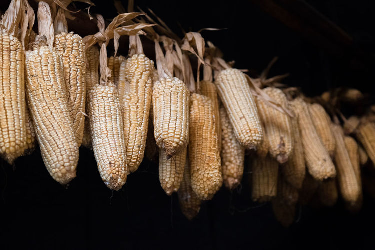 Close-Up Of Dried Corn Hanging Over Black Background