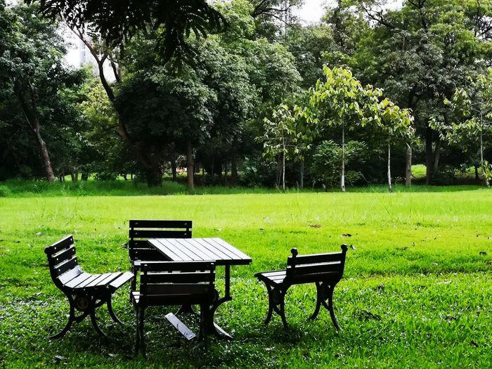Tree Seat Park