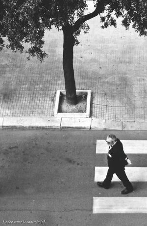 More on https://www.facebook.com/leccecomelacantoio/ One Person Outdoors Tree People And Places Blackandwhitephotos Black And White Lecce B/w Lecce City Streetphotography Streetphoto_bw Bnw Photography Lecce - Italia Leccecomelacantoio Lecce Black And White Photography Street Photography Man Walking Solitude Loneliness Melancholy Men Real People Blackandwhite Photography Blackandwhitephoto