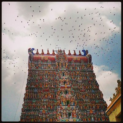 Who says Birds don't Pray Birdys crowning up the Meenakshi Temple for their Morning Prayers Bird Madurai Tamilnadu India Indiapictures Indiatraveller Incredibleindia Lonelyplanetindia Religion Belief Heritage Hinduism Hindu Cloudy Bluesky Architecture