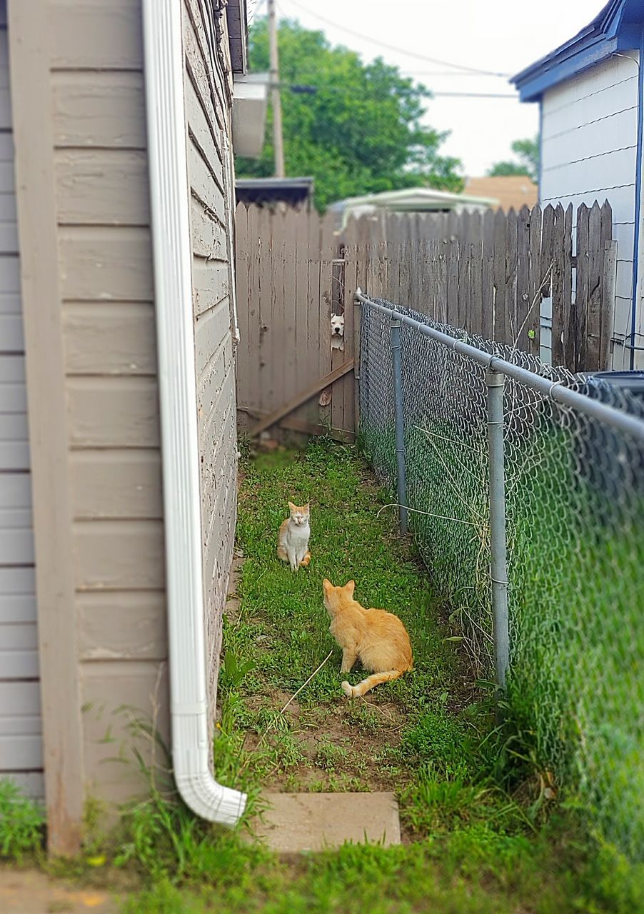 mammal, pets, animal themes, domestic animals, animal, domestic, one animal, vertebrate, architecture, built structure, plant, grass, day, no people, building exterior, dog, canine, nature, fence, outdoors