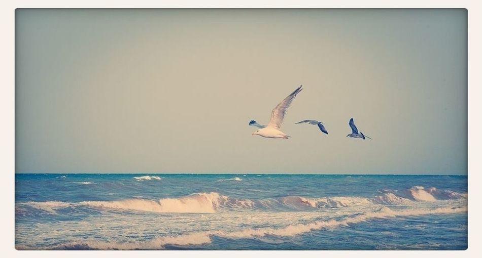 Seaside Seagulls Taking Photos