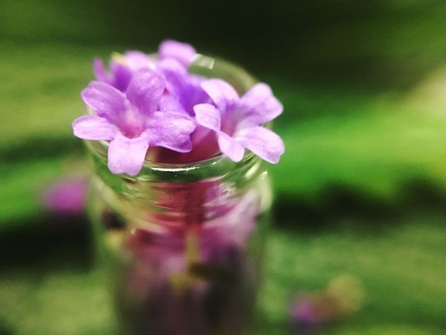 Flower Nature Petal Fragility No People Close-up Focus On Foreground Beauty In Nature Freshness Jar Flower Head Day