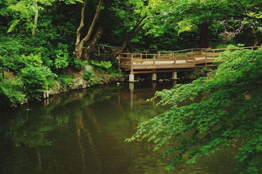Japan Kamakura Tree Water Footbridge Bridge - Man Made Structure Architecture Building Exterior Built Structure