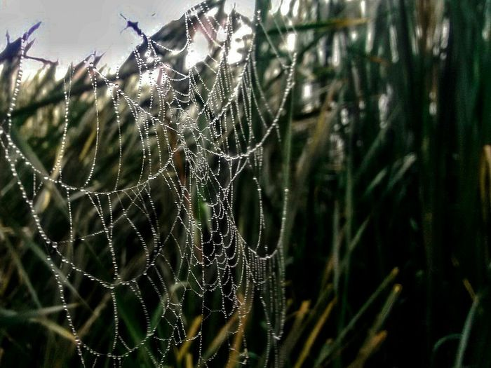 Dew Condensation Spider Web Spring Time