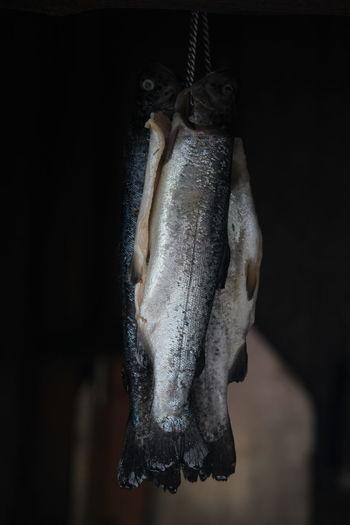 Fisch Food Smoker Fish Smoked Räucherfisch EyeEmNewHere EyeEm Nature Lover EyeEm Best Shots EyeEm Gallery EyeEm Outdoors EyEmNewHere EyeEmBestPics Eyeemphotography Hanging Close-up Fish Fish Market