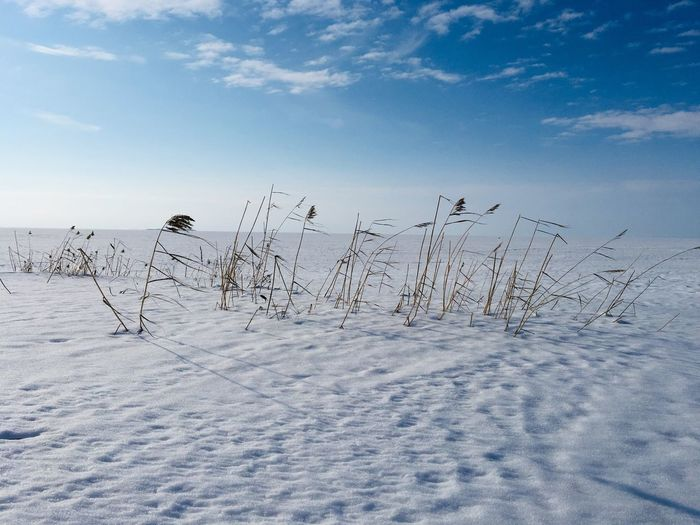 Flock of birds on snow covered field against sky